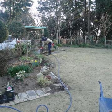 3月上旬 宿根草の株分け、植え込み