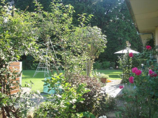 中心の樹は丸く刈り込んでいたキンモクセイ。秋の花は少なくなりますが、枝を抜き思い切って自然樹形に仕立て直し。